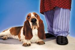 http://mydogmagazine.com/wp-content/uploads/2011/10/dogatownerfeetlarge.jpg