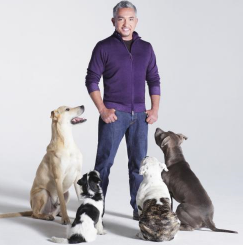 cesar millan Want Cesar Millan to Train Your Dog?