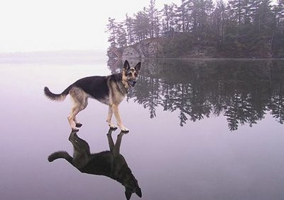cEGcd Do You Believe Dogs Can Walk on Water?